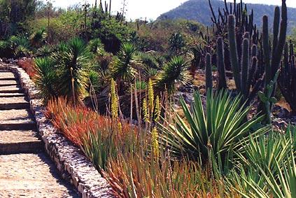 Gardens of eastern cuba real cuba online for Cactus santiago
